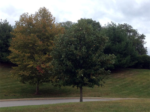 photo of fall trees in Glen Mills, PA